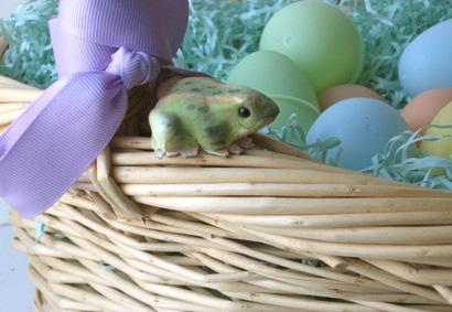 Basket_frog