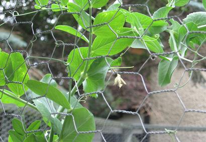 Garden_wire