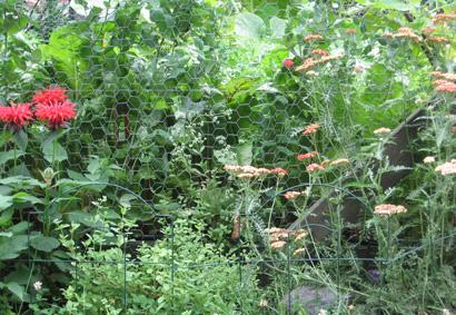 Garden_wire_2