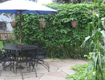 Bean_garden_wall