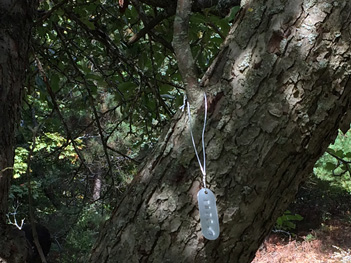 Tree_Tags_Branch_2